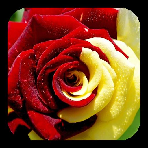 個人化App|玫瑰动态壁纸 LOGO-3C達人阿輝的APP