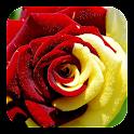 Rosa Live Wallpaper