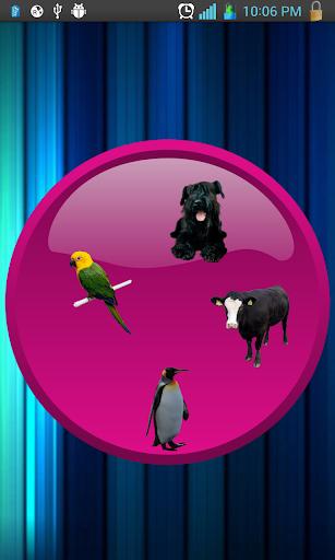 Animals eFlashCard