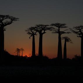 Baobab Alley, Madagascar by Edzo Boven - Landscapes Prairies, Meadows & Fields ( pentax, villes, rencontres, continents, découvertes curiosités, personnes, marchés )
