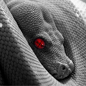 Angry Snake Live Wallpaper icon