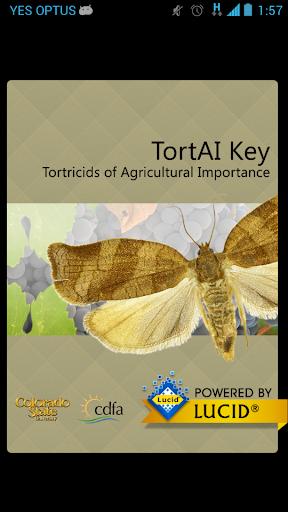 TortAI Key