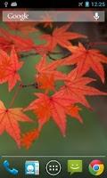 Screenshot of Maple Leaf Live Wallpaper