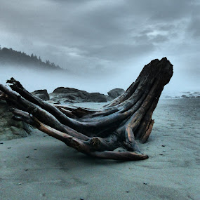 by James Kovac - Landscapes Beaches (  )