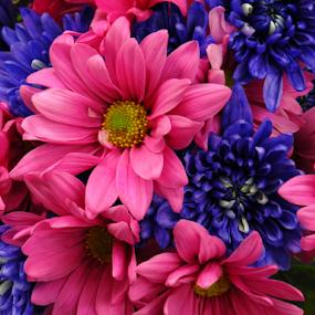 Pretty Purple Pink by Rhonda Lee - Flowers Flower Arangements ( bouquet, purple, colorful, bright, pink, pretty, flower, Flowers, Flower Arrangements )