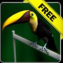 Tucan live wallpaper Free icon