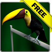 Tucan live wallpaper Free