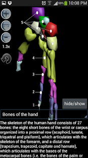 Human bones lite- screenshot thumbnail