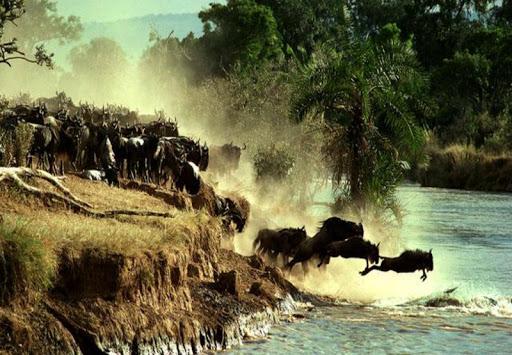 Animals Migration