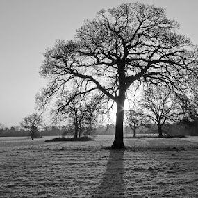 January Sunday Morning by Tony Murtagh - Black & White Landscapes (  )