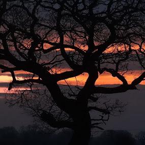 Twilight Zone - Close Up.. by Navid Qureshi - Landscapes Sunsets & Sunrises