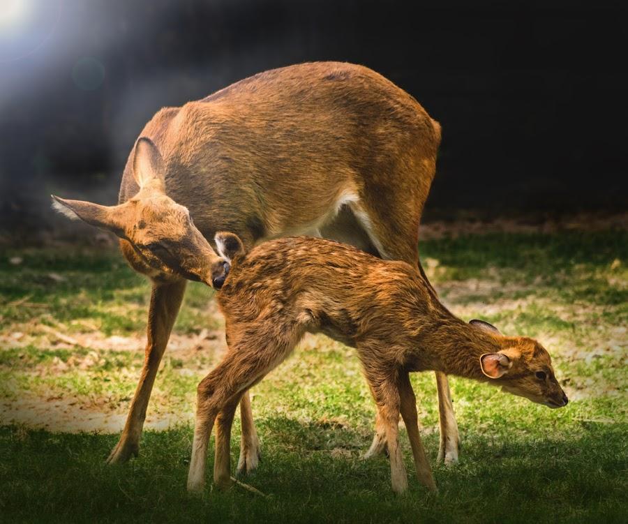 Mothers Love by Soumin Saha - Uncategorized All Uncategorized ( child, love, mother )