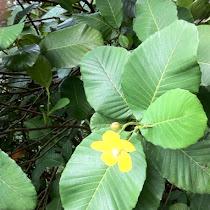 Plants of the SAS rainforest Malaysia