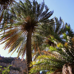 Palm trees of Vai - Crete (Greece) by Sakis Prodigy - Landscapes Forests ( forest, beach, crete, vai, palms )