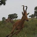 Wild Uganda 2