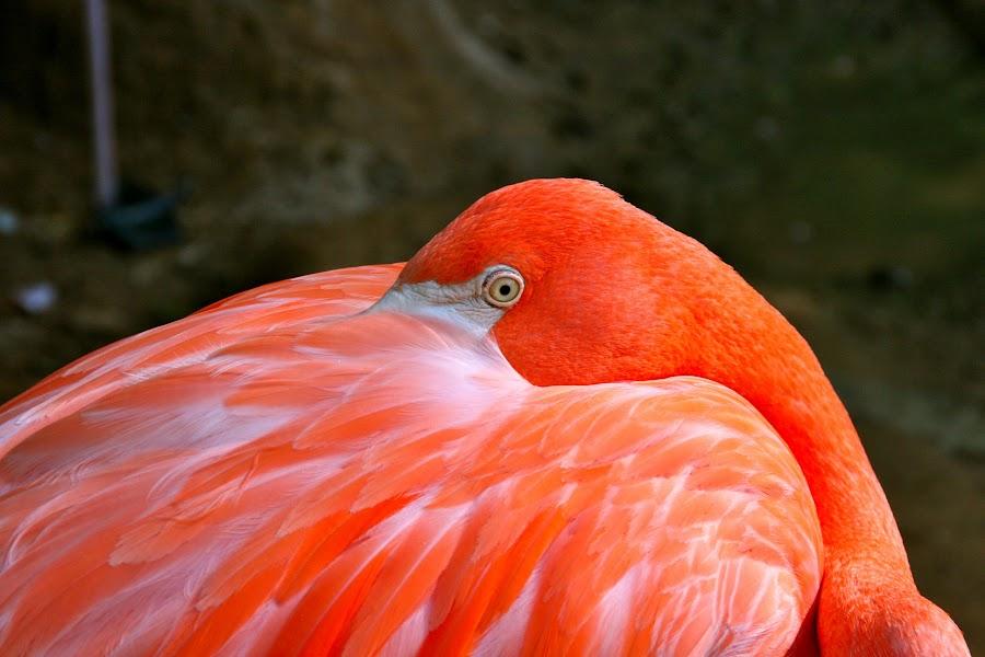 by Christina Davis - Animals Birds