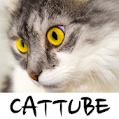 CatTube - Video of cat breeds