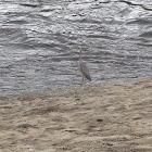 Unnamed spotting