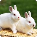 Cute Rabbit HD Wallpapers logo
