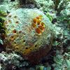 Orange Ball Sponge