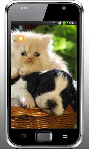 Puppy Best Free Live Wallpaper