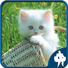 Jigsaw Puzzles Cats icon