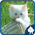 Cats Jigsaw Puzzles file APK for Gaming PC/PS3/PS4 Smart TV