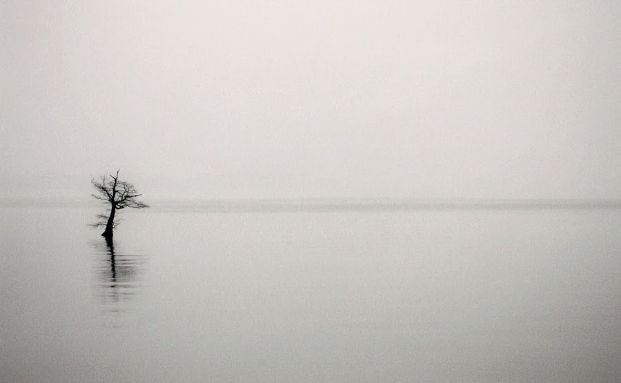 Reelfoot Lake by Paul Hopkins - Landscapes Waterscapes (  )