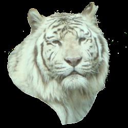 White Tiger Head Sticker