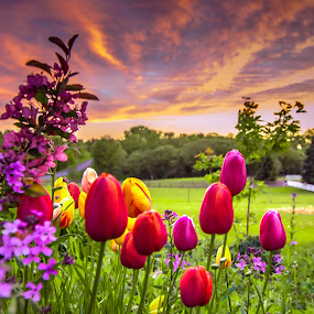 The Colors of Spring by Gary Hanson - Flowers Flower Gardens ( moods, colorful, colors, happiness, tulips, vibrant, spring, country, spring colorful flowers, inspiration, january, emotions, garden, mood factory,  )
