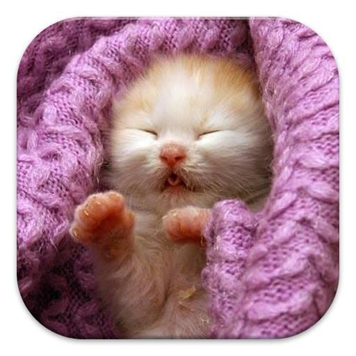 Sleepy Kitten Puzzle