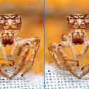 3D Jumping Spider Exoskeleton