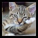 子猫 icon