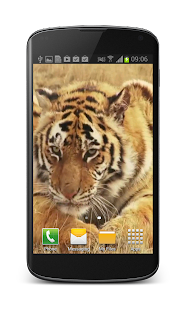 Tiger Free Video Wallpaper- screenshot thumbnail