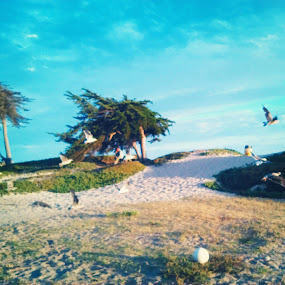 Fly away. by Nena Guzmán - Instagram & Mobile Android ( bird, sand, sky, fly, wings,  )