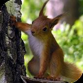 Squirrel Live Wallpaper