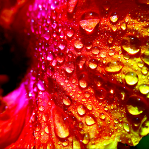 Colorful Drops.jpg
