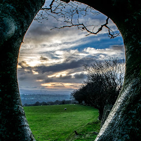 Tree framed sunset by Tracey Dobbs - Landscapes Sunsets & Sunrises (  )