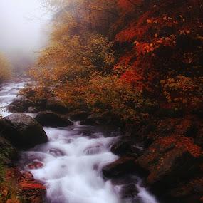 autumn river by Nicu Hoandra - Landscapes Waterscapes ( autumn, fog, river, colours )