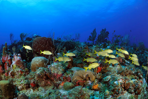 Snorkel or scuba-dive to get a close-up view of tropical fish and coral in the warm waters of St. Eustatius.