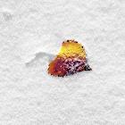 Snow Puzzle icon