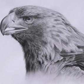 ÁGUILA by Kile Zabala - Drawing All Drawing ( charcoal, grafito, aguila, dibujo, animales )