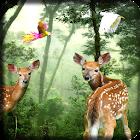 Rain Forest LWP icon