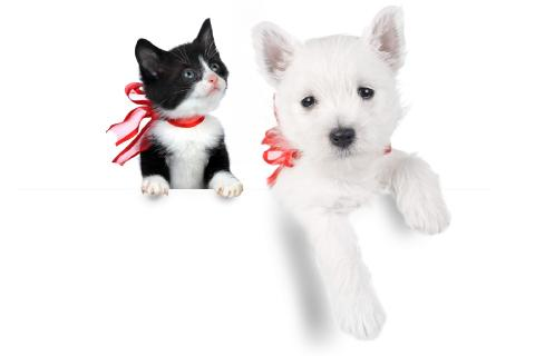 Kitten & Puppy Live Wallpaper - screenshot