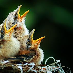 by Abhi Yasa - Animals Birds (  )