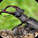 昆虫図鑑 - BugPedia