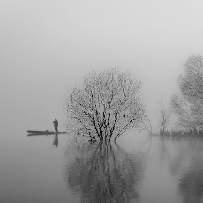 Appearing in the fog by Paulo Veiga - Black & White Landscapes ( trees,  )