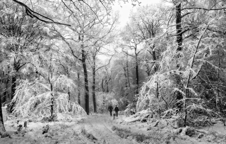 Winter Walk by Ceri Jones - Landscapes Forests ( winter, snow, forest, woodland, woods,  )