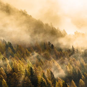 Alpine Fog by Franco Beccari - Landscapes Forests ( fog, forest, pine trees, italy, mist, alps )