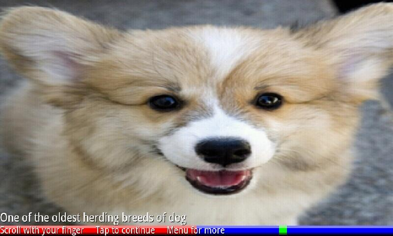 Puppies and Dogs 1 FREE- screenshot